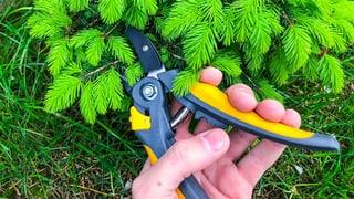 Gartenscheren im Test: Müheloses Schneiden gibt's für wenig Geld  (Artikel enthält Video)