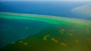 Dreckwasser bedroht das Great Barrier Reef (Artikel enthält Video)