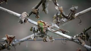 Obstbauern im Baselbiet bangen wegen der Kälte um ihre Ernte