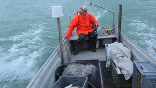 Berufsfischer wollen keine Fische züchten