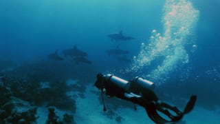 Video ««Einstein»-Spezial: Delfine im Roten Meer» abspielen