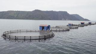 Video «Fischzucht-Spezialsendung: Der Fisch auf unseren Tellern» abspielen