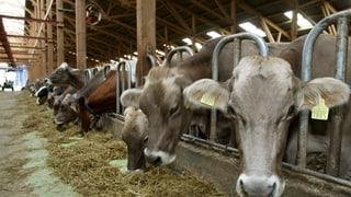 Rinder-Tuberkulose beunruhigt St. Galler Kantonstierarzt