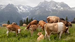 Fleisch statt Milch – Bauern satteln um
