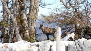 Video «Das Tal der Grünen Fee: Val de Travers» abspielen