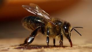 Bienen brauchen auch im Winter Pflege