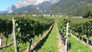 Tut auter ch'in simpel onn per ils viticulturs