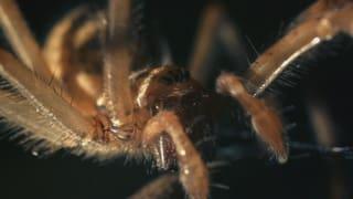 Achtbeiner hautnah: Willkommen im Haus der Spinnen