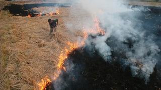 Auch in Indien hat das Abbrennen von Feldern Tradition