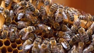 Der Bienenschutz ist ausreichend – findet der Nationalrat