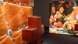 Die Wunderkräfte von Stammzellen im Museum