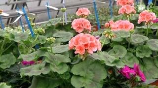 Gartenerde im Test: Worin Pflanzen gut gedeihen
