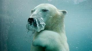 Hiobsbotschaft aus dem «ewigen» Eis