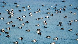 Wasservögel werden besonders beobachtet