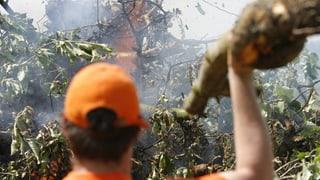 Die Thurgauer Angst vor dem Feuerbrand