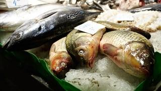 Frischer Fisch – schmackhaft, aber heikel