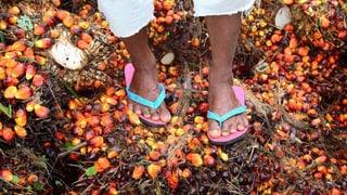 Streit um Palmöl verhindert ein Abkommen