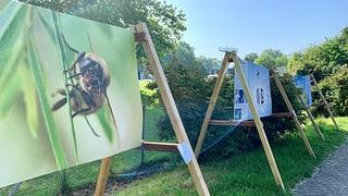 «Ohne Bienen ist die Menschheit am Ende»