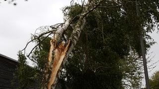 Sturmböen knickten Bäume