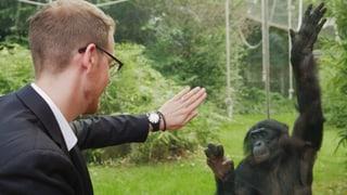 Video «Ausnahmetalent, Animationskunst, Affenforschung» abspielen