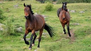 Pferdefleisch in Schweizer Würsten