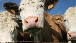 Stimmvolk sagt Ja zum Tierseuchengesetz