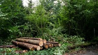 Es gibt nicht mehr Geld für den Aargauer Wald (Artikel enthält Video)