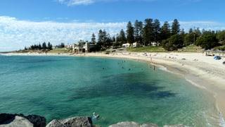 Australien jagt «Bestien der Meere»
