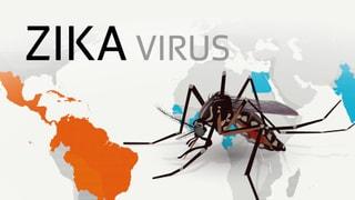 Zika-Virus – Chronologie einer Epidemie