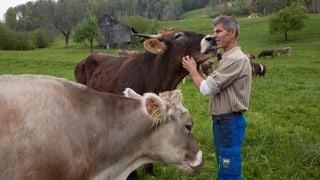 «Kühe und Kälber rufen nach der Trennung tagelang nacheinander»