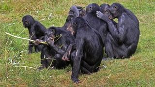Affen und Salamander beim Mathetest (Artikel enthält Audio)