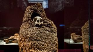 Warum Museen für die Wissenschaft einen unschätzbaren Wert haben.