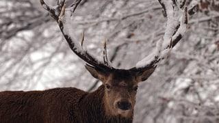 Kampagne gegen Wildtierfütterung lanciert