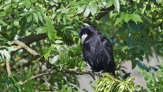 Das Gemeindeblatt ruft zu Beschwerden auf gegen die Vögel.