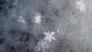 Die Schneeflockenzüchter