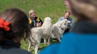 Touristentaugliche Schafbeschützer