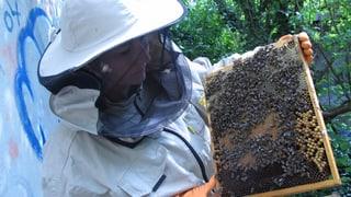 Die Oltner Stadtbienen sind schon im Februar ausgeflogen