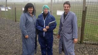 Reportage: Kontrolle auf dem Freiland-Hühnerhof