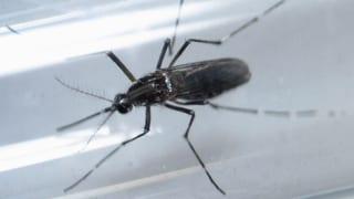 Ist die Zika-Gefahr gebannt?