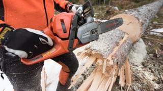 «Die Nachfrage nach Schweizer Holz ist erfreulich gut», sagt Thomas Lädrach, Präsident Verband der Schweizer Holzindustrie.