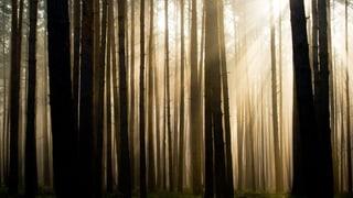 Zum Sterben in den Wald