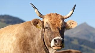 Naginas subvenziuns per animals cun cornas