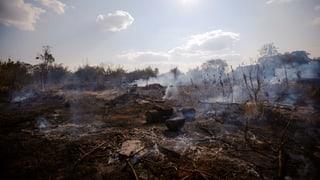 Verbrannte Erde – ökologisch und politisch