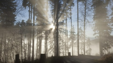 Grau in Grau ist schön: Das sind Ihre schönsten Novemberbilder (Artikel enthält Bildergalerie)