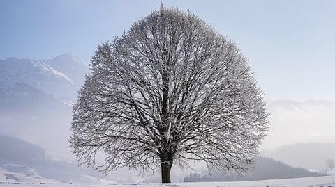 Herrliches Winterwetter auf den Bergen (Artikel enthält Bildergalerie)