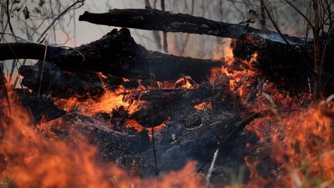 Der verzweifelte Kampf um den Erhalt des Regenwaldes (Artikel enthält Video)