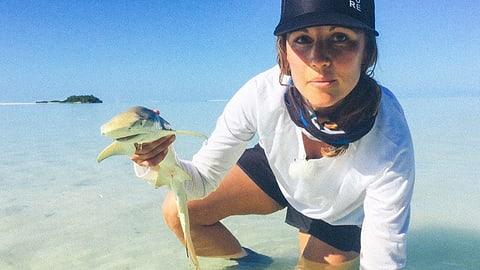 Haie und Schildkröten im Atoll auf den Seychellen