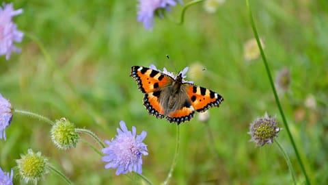 Hotspot der Artenvielfalt – 9 Tipps für einen naturnahen Garten (Artikel enthält Bildergalerie)