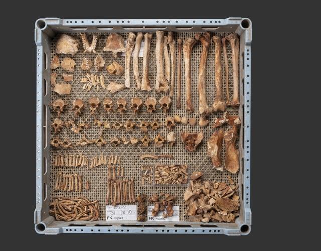 Das Skelett einer Berberaffen lag in einer Latrine aus dem Mittelalter