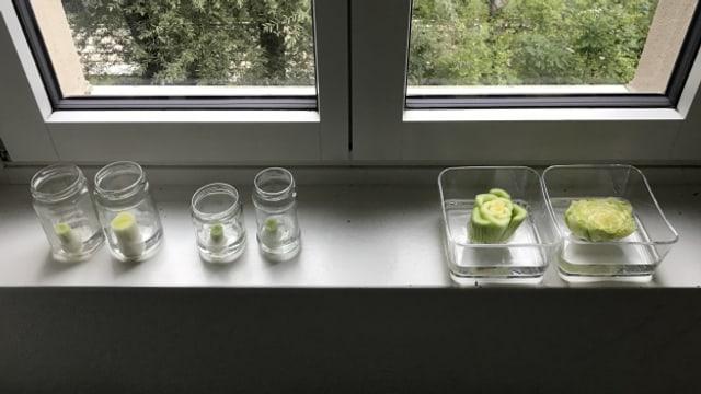 Geduld bringt nicht nur Rosen, sondern auch Lauch, Fenchel und Salat.